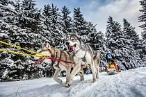 Šediáčkův long - závod psích spřežení v Orlických horách.