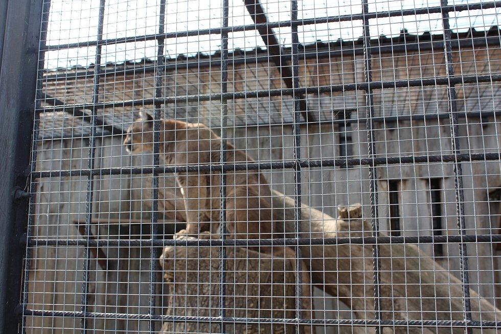 Malá zoologická zahrada ve Stěžerách opět láká k návštěvě.