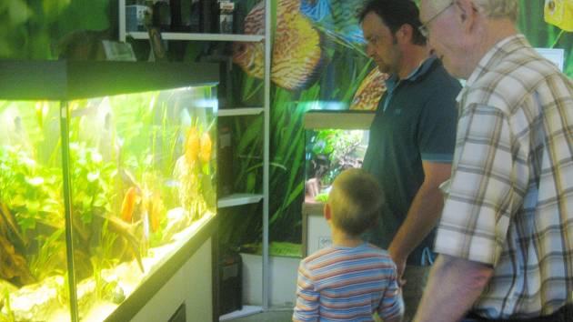 Výstava rybička odstartovala v sobotu.