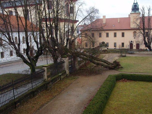STALETÝ STROM v zámecké zahradě v Litomyšli nevydržel nápor silného větru.