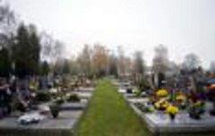 Na svitavském hřbitově se kácí.