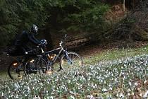 11.Cyklistů tady také potkáte nespočet. Na kole tři kilometry po lesní asfaltce ubíhají rychleji.