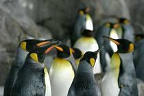 Tučňáci na Novém Zélandu.
