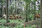 Les u Mikulče po červencové větrné smršti.