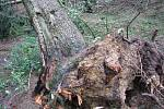 Kalamita v lesích u Kukle na Svitavsku.