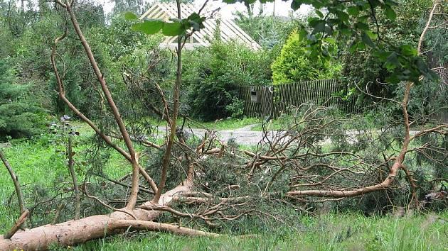 Silný vítr a déšť poškodil lesní porost.