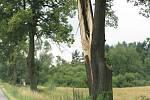 Poničené stromy na trase Litomyšl - Svitavy v obci Mikuleč.