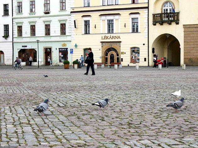 Holuby na náměstí T. G. Masaryka v Moravské Třebové obyvatele města neděsí.