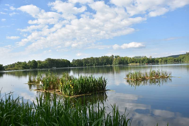 NA ROSNIČKU ve Svitavách se vrací život. Kvalita vody v rybníku se zlepšuje, svědčí o tom i výskyt řasy šroubatky, kterou vloni začali hasiči z hladiny odstraňovat.