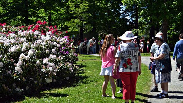 Den rododendronů ve Svitavách.