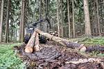 V lesích u Svitav vytěžila technika stovky kubíků dřeva na opravu domů na jižní Moravě.