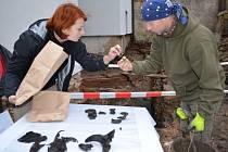 UNIKÁTNÍ NÁLEZY archeologů v Růžové ulici pomohou dokreslit představu o tom, jak vypadalo středověké osídlení Litomyšle.