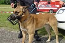 Policejní pes Abel.