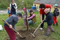 OVOCNÝ SAD mají v zámeckém parku v Bystrém. Založily ho děti společně s hendikepovanými obyvateli domova.