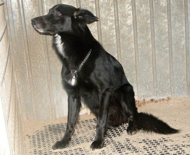 Toník je opuštěný pes, který by potřeboval hodného pána, který by s ním chodil na procházky.
