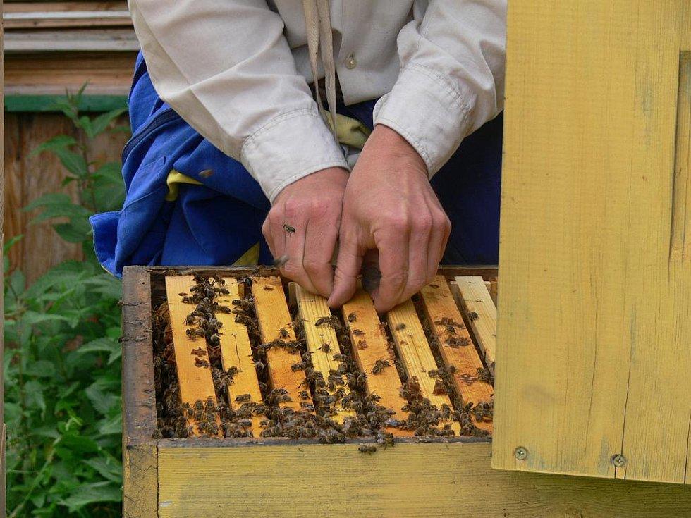 """Včely ukládají nektar do buněk v plástu. Po odpaření vody je zavíčkují. Včelař tak pozná, že je med """"hotový"""" a může stáčet."""