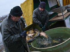 Svitavský rybník vydal rybářům při pátečním výlovu sto padesát metráků ryb. Nechyběl tradiční kapr, tolstolobik, lín, amur, ani dravé ryby.