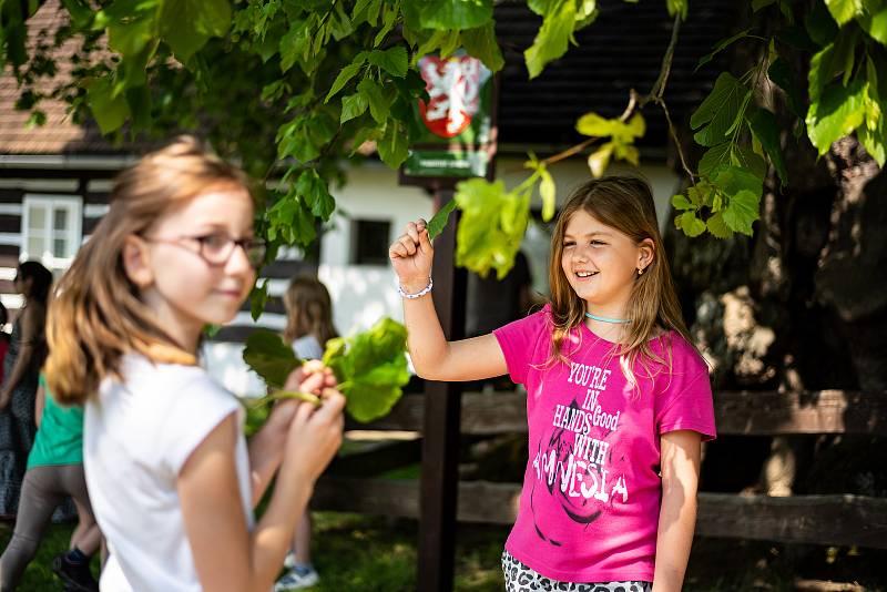 Zpívající lípa v Telecím u Poličky vyhrála anketu Strom roku.