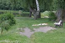 Rybník Rosnička.