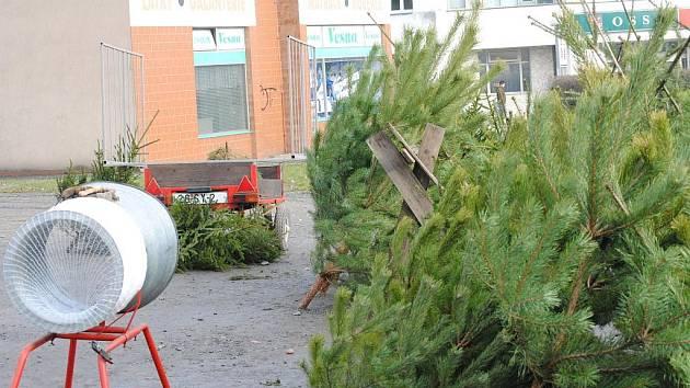 Prodej vánočních stromků ve Svitavách.