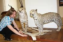 Africké safari ve svitavském muzeum
