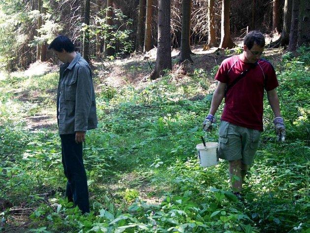 Účastníci ekologického programu Týden pro les nedaleko Květné označují staré stromy, které nečeká kácení. Hnutí Duha přispívá k obnově přirozených lesů.