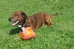 BAF. Pejsek je starý asi tři roky. Je hodný a mazlivý.