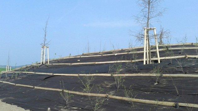 PARK PATRIOTŮ ve Svitavách dostává  svoji podobu. Stromy už jsou na svém místě, zbytek prací pokračuje.