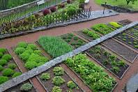 V areálu hradu Svojanov se nachází kromě posezení a altánů i bylinková zahrada.