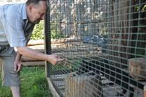 Polární liška, nosál nebo srnka, tato všechna zvířata se nyní nacházejí v záchranné stanici ve Vendolí.