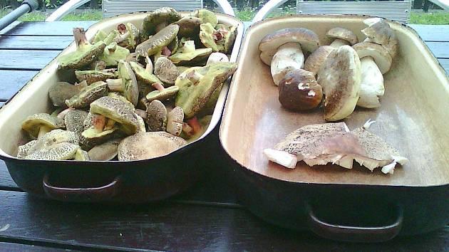Nadílka houbaře z Morašic.