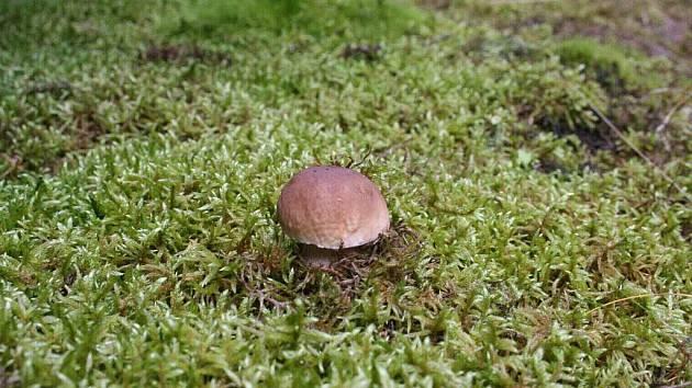 V lese zase zavoněly houby.