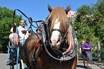 KOMISE VESNICE ROKU poznala Dolní Újezd z vozu taženého koněm.