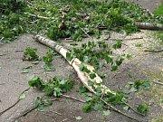 Větev, která na ženu spadla