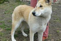 Pěkná psí slečna, asi roční, vyčkává ve Vendolí nového pána.