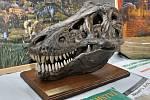 TYRANOSAURUS REX. Hlava obávaného predátora  je jednímz unikátních exponátů na výstavě v Poličce.