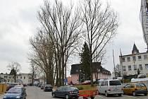 Stromy před nemocnicí brzy padnou.