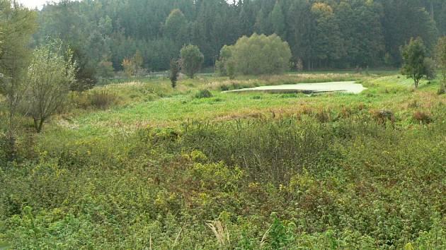 Pozemek se dvěma rybníčky nabízí idylku i spoustu druhů chráněných živočichů.
