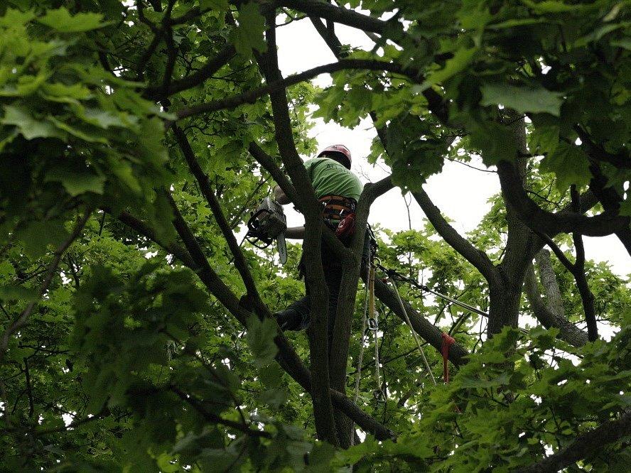 Prořezávání stromů na hřbitově