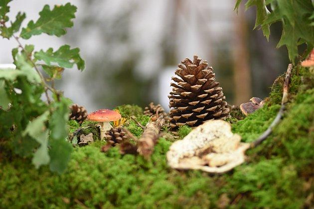 Mykologové zDolního Újezdu vystavili desítky druhů hub a navařili houbové speciality.