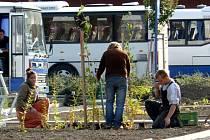 Zahradníci zkrášlují autobusové nádraží. Úpravy mají být hotové na konci října .
