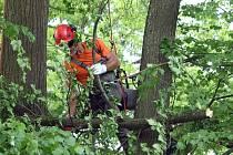 Lípa velkolistá prošla ve čtvrtek zásahem mezinárodně uznávaných odborníků. Vzácný strom prořezali a také svázali.
