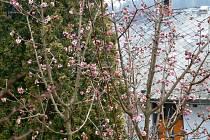 Jaro v zahradě.
