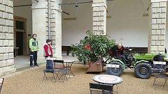 Zeleň na zámku v Litomyšli je na svém místě.