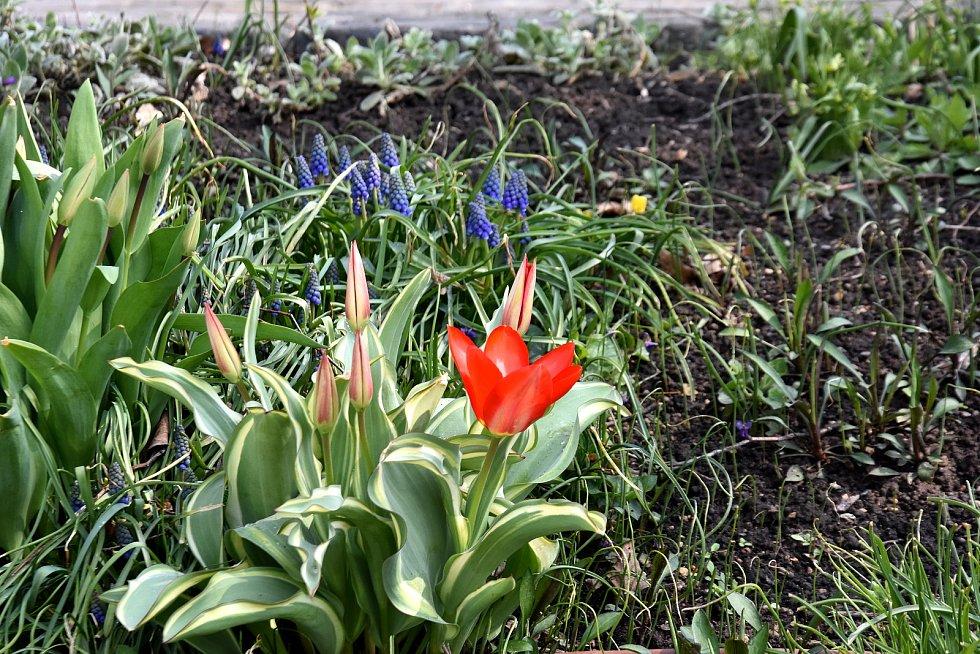 Rozkvetlé Klášterní zahrady v Litomyšli.