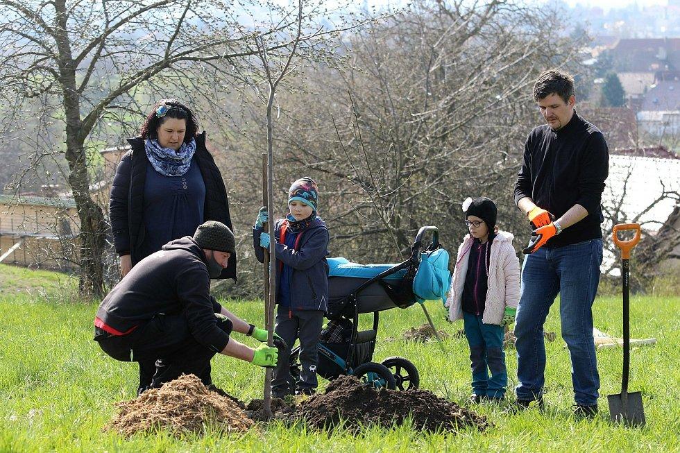 Čtyři desítky rodin si zasázely Stromy života pro Litomyšlata.