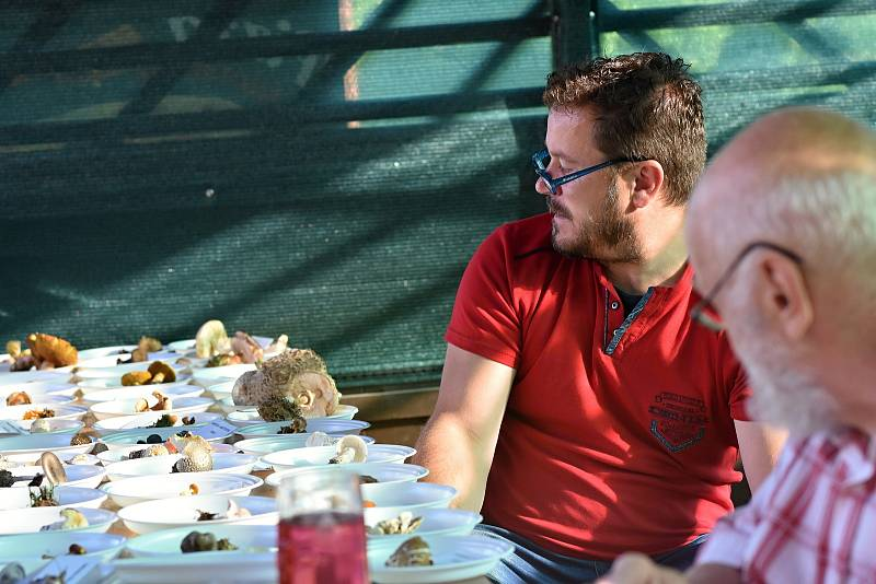 Jiří Kohák je členem Mykologického klubu Dolní Újezd a rád poradí všem lidem, kteří se zajímají o houby.