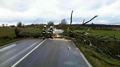 Spadlý strom zablokoval silnici mezi Mikulčí a Svitavami.