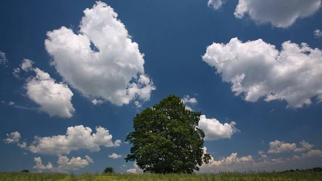 Strom rodáků v Bystrém