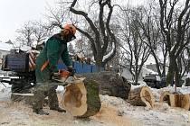 Kácení stromů ve Wolkerově aleji ve Svitavách.
